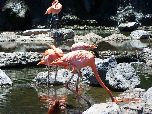 Red Flamingo On Batu Secret Zoo