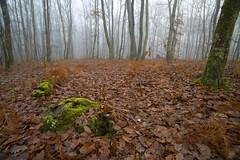Autumn undergrowth (JR-pharma) Tags: autumn fog forest automne canon eos woods mood witch hiver atmosphere eerie creepy blair 5d toulouse cinematic tamron 169 brouillard fort brume ambiance undergrowth sousbois 1735 brax mk1 atmosphre bouconne f284 levignac 5d1 leguevin