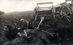 Killed horses and damaged wagons are brought to a common location (✠ drakegoodman ✠) Tags: horses wagon soldier postcard explosion german artillery carnage killed ww1 damaged greatwar destroyed firstworldwar 1917 supply shrapnel rppc feldpost grandguerre bayonetfrog