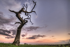 Sleepy Hollow (l.bailey_beverley) Tags: uk winter sunset england sky tree nature nikon december d200 westwood hdr beverley eastyorkshire 2011 photomatix