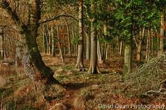 Winter Woods (jactoll) Tags: uk winter england field rural landscape countryside nikon farmland onions rows pro crops nik nikkor hdr warwickshire vr midlands warks efex weethley 1685mm d7000 jactollcrookbarrowhill