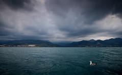 Au large de Gouraya , Algrie (Algeria) (albatros11) Tags: africa sea cloud mer seascape bird nature landscape algeria pentax seagull nuage oiseau algrie kx goland pentaxkx smcpentaxda1855mmf3556alii