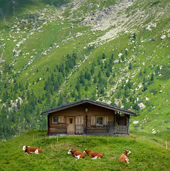 Austrian mountain farm in the high summer pastures (Bn) Tags: wood summer vacation mountain holiday alps green car walking geotagged austria tirol topf50 cattle cows hiking walk farm meadows cable glacier alpine pasture valley pastures gras farmer migration gletscher treeline viewpoint tux topf100 tyrol zillertal hintertux mayrhofen joch tuxer 100faves 50faves hintertuxer geo:lon=11667679 geo:lat=47095985