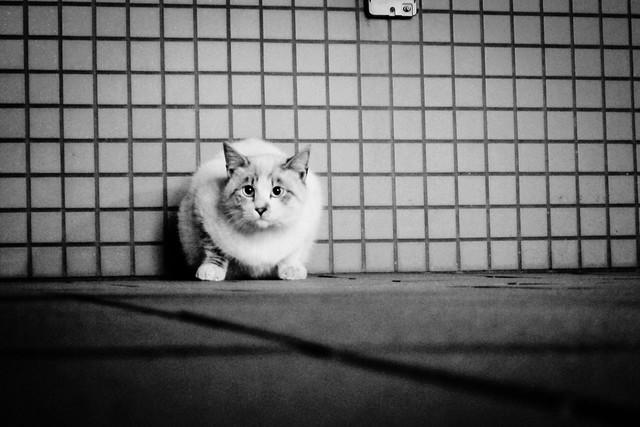 Today's Cat@2012-01-12