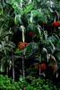 72441_TADEU NASCIMENTO_MORRETES PARANA (Tadeu_Nascimento) Tags: paraná janelas vegetação morretes flôres tadeuonascimento