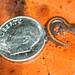 Newly Metamorphed Ozark Zigzag Salamander