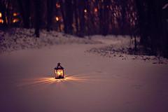 the sun is gone but I have a light (AmyJanelle) Tags: light snow dark woods alone purple path magic footprints narnia lone lantern shining lightindarkness snowypath