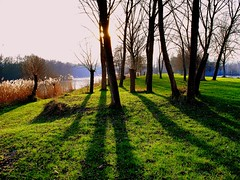 winter sun (mujepa) Tags: trees winter sun france reeds soleil pond shadows hiver january arbres lorraine janvier rushes roseaux metz tang ombres longshadows joncs mygearandme outremoselle photographyforrecreation photographyforrecreationeliteclub bbng rememberthatmomentlevel1 rememberthatmomentlevel2