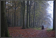 Walk in the Forest (Colpics) Tags: holland forest foggy friesland rijs canoneos5dmkii canonef2485mmusmlens