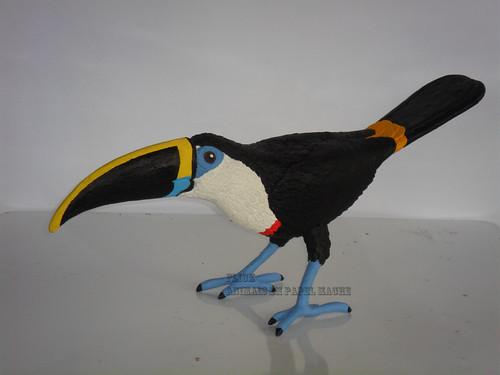 R. tucanus cuvieri (1)