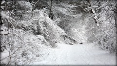 A path through the winter snow (blmiers2) Tags: winter snow nikon coolpix s3000 blm18 blmiers2