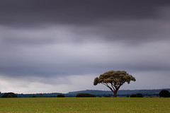 Alone in the storm (Antonio Carrillo (Ancalop)) Tags: sky espaa cloud tree green field canon de landscape arbol la spain europa europe long exposure cloudy mark paisaje murcia filter cruz le ii 09 cielo nubes l 5d nublado lopez antonio f4 carrillo larga 70200mm exposicin gradual caravaca gnd8 ancalop