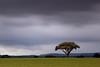 Alone in the storm (Antonio Carrillo (Ancalop)) Tags: sky españa cloud tree green field canon de landscape arbol la spain europa europe long exposure cloudy mark paisaje murcia filter cruz le ii 09 cielo nubes l 5d nublado lopez antonio f4 carrillo larga 70200mm exposición gradual caravaca gnd8 ancalop