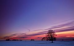 Winter '11b (Kaldesign89) Tags: blue trees winter sunset england sky orange snow clouds nikon silhouettes staffordshire hilderstone d7000