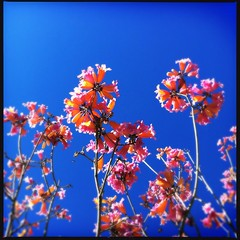 (MarkGoBlue) Tags: flowers tree loftus iphone iphone4 iphoneography dcfilm hipstamatic loftuslens loftusdc