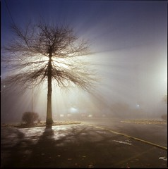 Benson (Button2PushButtons) Tags: street longexposure light urban tree 120 fog night analog zeiss square very kodak foggy hasselblad midnight medium format 500 portlandor portra available 503cxi