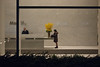 StillLife (zlandr) Tags: street city nyc newyorkcity flowers windows urban newyork streets window manhattan framed candid officebuilding olympus midtown ep1 alonetogether thedefiningtouch deftouch chrisfarling zlandr
