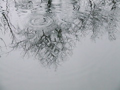 raining 3 (kenderfrau) Tags: water rain reflections circles surfaces