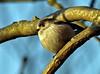 Longtailed Tit (Mr Grimesdale) Tags: birds tit wildbirds britishbirds stevewallace smalltit mrgrimesdale