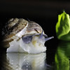 Hello! (Solomulala | mostly weekends ;-( !) Tags: light night dark square foto snail caracol nocturno solomulala murieldejong