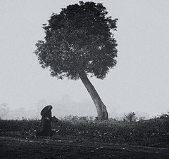 The Lonely Walker (Javed.Miandad) Tags: bw tree canon village veil lonely melancholy 200mm 550d womeninveil nikkorq200mm
