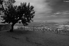 Xàtiva (Archineos) Tags: blackandwhite bw tree byn blancoynegro monochrome clouds landscape bn biancoenero xàtiva d90 ugovillani archineos