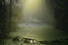 "CBBR 1-9-12--5745-The Swamp ""Explored"" (stan hope) Tags: park morning light usa nature water landscape nikon florida wildlife swamp topaz lakelandflorida cbbr d7000 circlebbarreserve nikssoftware"