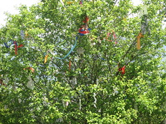 Ribbons left in a tree to make wishes (eltpics) Tags: tree ribbons wishes wishing eltpics