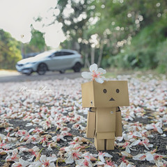 -  (M.K. Design) Tags: flowers nature wagon landscapes volvo nikon bokeh taiwan sigma   hdr  puli hatchback   crossover nantou   2016  v40  85mmf14        tungflowers  danboard    d800e v40crosscountry v40cc