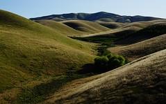 Crisscross (Alvin Harp) Tags: california ca light mountains nature may rollinghills 2016 teamsony centralcaliforniavalley sonya7rii alvinharp