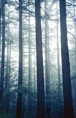 Frost (-Alberto_) Tags: fog forest 35mmfilm carlzeiss kodakektar yashicataf