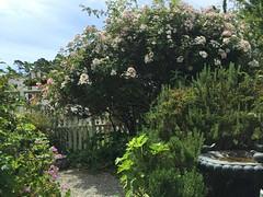 Garden at Spellbound (tiny red warrior) Tags: california garden roadtrip cambria spellbound