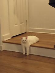 Awkward Half-Cat Inspires Hilarious Photoshop Battle (15+ Pics) (jh.siesta) Tags: photoshop hilarious pics battle awkward inspires halfcat