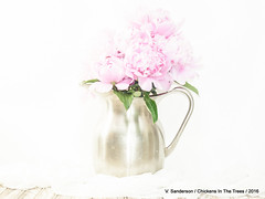 Peonies -- Happy Sliders Sunday (Chickens in the Trees (vns2009)) Tags: pink flowers stilllife stainlesssteel pastel vessel peony ethereal bunch highkey bouquet peonies hss waterpitcher