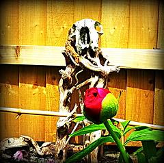 It lives (Time Grabber) Tags: flower garden skeleton cross vine peony frog redheart twisted scull symbolism timegrabber sheepscull