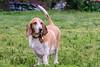 16-05-15_untitled_316 (Daniel.Lange) Tags: dog philadelphia dogs dogdayafternoon spado columbussquarepark