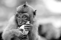 Mine. (Universal Stopping Point) Tags: bw bali selfportrait indonesia monkey holding eating banana ubud suspiciouslooking