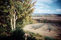 , (Benedetta Falugi) Tags: film analog tuscany maremma 22mm eximus benedettafalugi wwwbenedettafalugicom monteorgiali