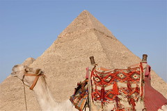 A Smile and A Wonder (The Spirit of the World) Tags: animal egypt cairo camel pyramids ancientcivilization giza autofocus egyptianpyramids wondersoftheworld thepyramids thegreatpyramid ancientwonders excapture absolutelyperrrfect mygearandme blinkagain flickrtravelaward flickrstruereflection1