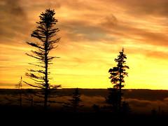 Two trees on the peat bog (Orion 2) Tags: trees sunset red orange canada nature colors yellow landscape dusk north mire muskeg newfoundlandandlabrador peatlands nocoloradjusting blacksprucetrees justalittleexposureadjusting