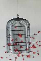 Libert (Maryse Algoet) Tags: art hospital cage libert es denia dco 135mm nikond90 vollire