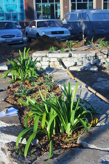 Urban blight turned into gardens