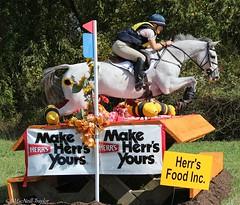 herrs jump grey (Jen MacNeill) Tags: horses horse jumping maryland crosscountry horseshow equestrian thoroughbred macneill fairhill eventing threeday eventers gypsymarestudios jennifermacneilltraylor