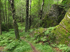 20110723_09 Forest path & mossy rock near Lake Delsjn | Gothenburg, Sweden (ratexla) Tags: trees summer favorite green nature beautiful forest wow gteborg landscape cozy woods scenery europe sweden earth path gothenburg norden skandinavien scenic trail skog sverige scandinavia cosy stig scandinavian sommar goteborg tellus nordiccountries catchycolorsgreen 2011 europaeuropean almostanything unlimitedphotos skogsstig canonpowershotsx10is 23jul2011 photophotospicturepicturesimageimagesfotofotonbildbilder notintheeternityset