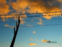 Bedtime for Birdies (Maureclaire) Tags: sunset sky bird birds clouds ma evening twilight dusk telephonepole telephonewires birdsonwire westernma colorfulsky turnersfallsma mygearandme blinkagain