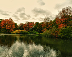 Colors under a cloudy sky (*Gitpix*) Tags: park autumn trees sky lake reflection fall nature clouds germany landscape deutschland see pond nikon cloudy herbst natur himmel wolken autumncolors coolpix nrw teich dsseldorf landschaft bume spiegelung baum gettyimages reflektion wolkig herbstfarben flickraward doubleniceshot tripleniceshot flickraward5 mygearandme mygearandmepremium mygearandmebronze mygearandmesilver mygearandmegold mygearandmeplatinum mygearandmediamond flickrawardgallery