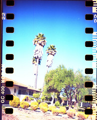 Sprocket Palms (earthdog) Tags: travel vacation tree film 35mm lomo lomography toycamera palm salinas palmtree sprocket 2011 sprocketrocket
