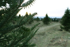 On Christmas Tree Farm