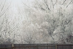 (provincijalka) Tags: morning trees winter white cold glitter frozen utah still frost december quiet gray freezing muted nosnow lifeless fencedin 2011 almostmonochromatic provincijalka eearie justfrost youcanseeyourbreathcold