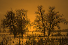 Pure Morning (ionut iordache) Tags: trees winter orange snow sunrise canon romania transylvania transilvania canonef2470mmf28lusm arad ardeal canoneos50d canon50d mygearandme mygearandmepremium mygearandmebronze mygearandmesilver mygearandmegold mygearandmeplatinum mygearandmediamond